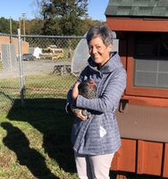CHS Culinary Arts Adds Laying Hens to the Program!